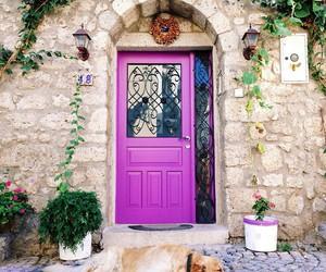 door, dog, and pink image