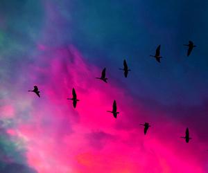 bird, pink, and sky image