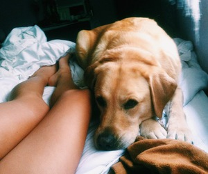 dog and legs image
