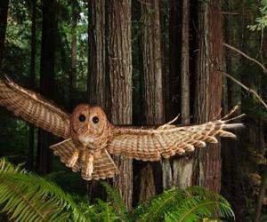 owl, forest, and animal image