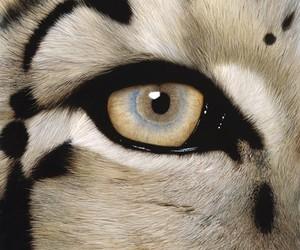 animal, eye, and eyes image