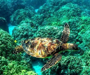 turtle, sea, and ocean image