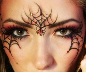 spider image