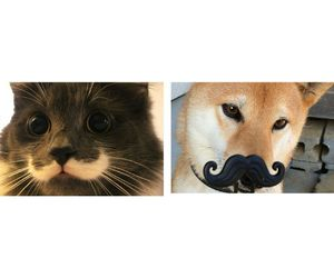 cat, dog, and love image