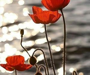 beautiful, flowers, and ocean image