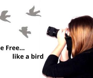 bird, foto, and free image