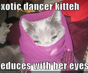 cat, exotic, and funny image