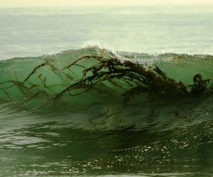 sea, algae, and wave image