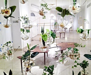 hanging plant baskets, hanging indoor plants, and hanging house plants image
