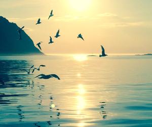 sea, bird, and sun image