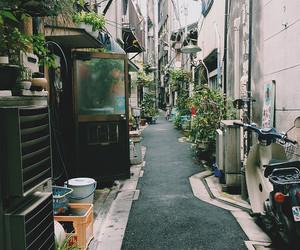 japan and plants image