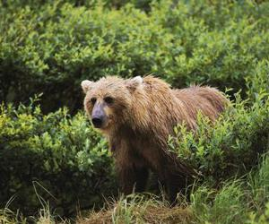 animal, bears, and forest image