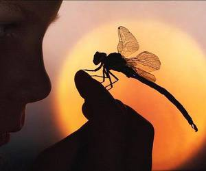 dragonfly and sunset image