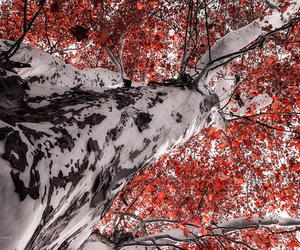 autumn, photography, and colors image