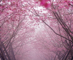 flower, mist, and pink image