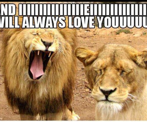 funny, lion, and lol image
