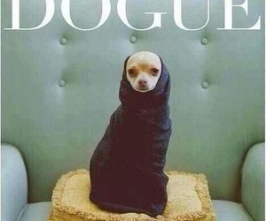 cool, glamour, and dog image