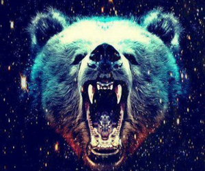 bear, hipster, and galaxy image