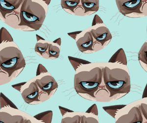 cat, wallpaper, and grumpy cat image