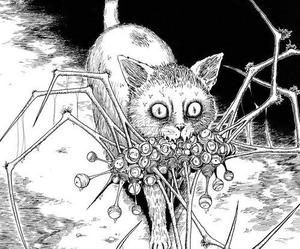 cat and spider image