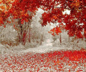 beautiful, winter, and fall image