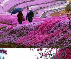 awesome, flowers, and pathway image