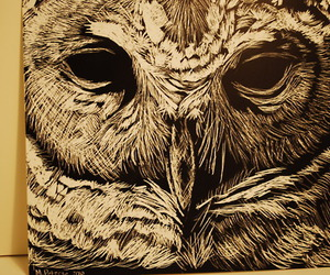 owl, painting, and draw image