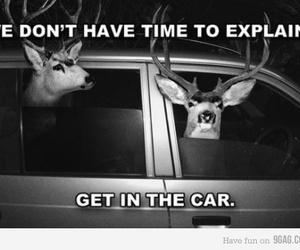 car, deer, and lololol image