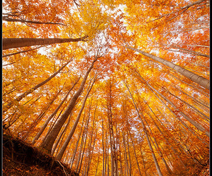 trees and autumn image