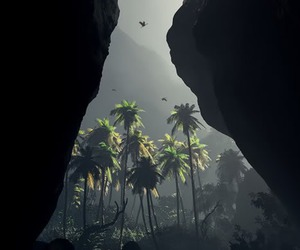 nature, palms, and paradise image