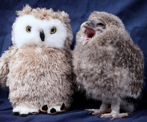 owl, bird, and cute image