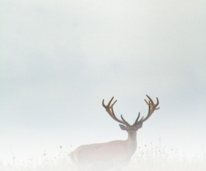 deer and fog image