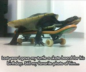 aww, funny, and skate board image