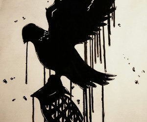 black, dove, and drawing image