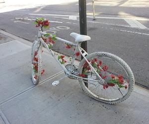 flowers, white, and bike image