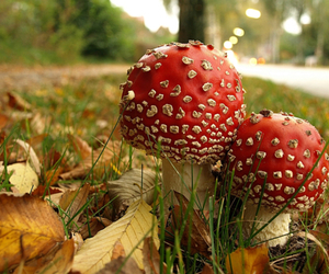 amanita, fungi, and fashion image