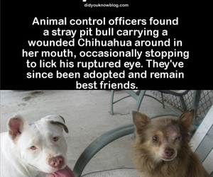 animals, did you know, and aww image