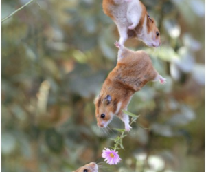 flower, mice, and cute image