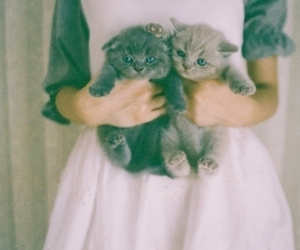 cats, vintage, and girly image