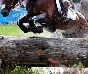 cross, horse, and jump image