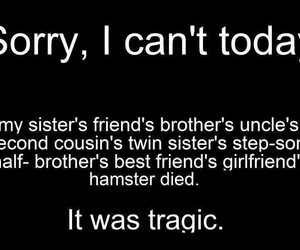 funny, sorry, and hamster image
