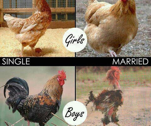 funny, boy, and Chicken image