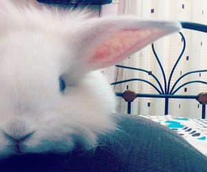 lovely, rabbit, and tumblr image