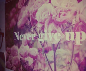 flower, give, and tumblr image