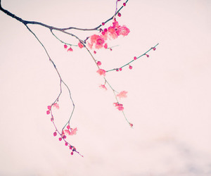 beautiful, flower, and japan image