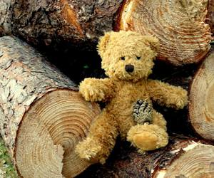 bear, teddy, and tree image