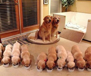 adorable, puppy, and pup image