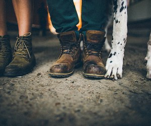 dog, couple, and pets image
