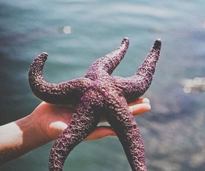 sea, starfish, and stars image