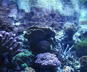 underwater, ocean, and coral image